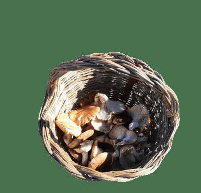 cesta setera seta de cardo