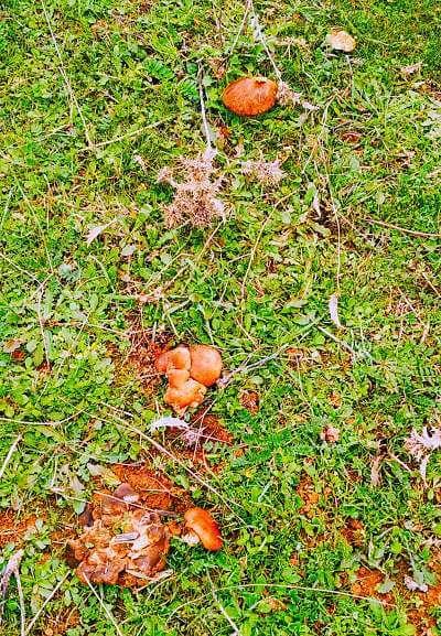 setas de cardo en campo